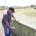 Bale Temp probe in bale pic