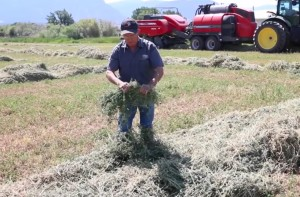 Twising hay for checking windrow